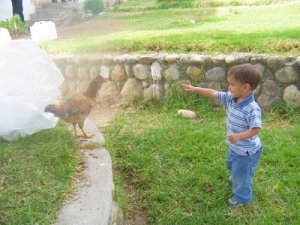 My son chasing a chicken in Ecuador