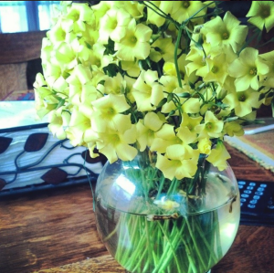 "The day hubby picked me flowers from our backyard because he thought they were ""happy"""