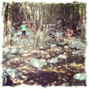 "Hiking through some woods on the top of a mountain. ""It's just like Narnia!"" my kids shouted."