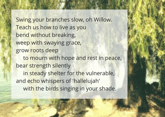 swing-your-branches-oh-willow-4